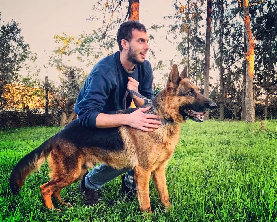 איך מאלפים כלב?