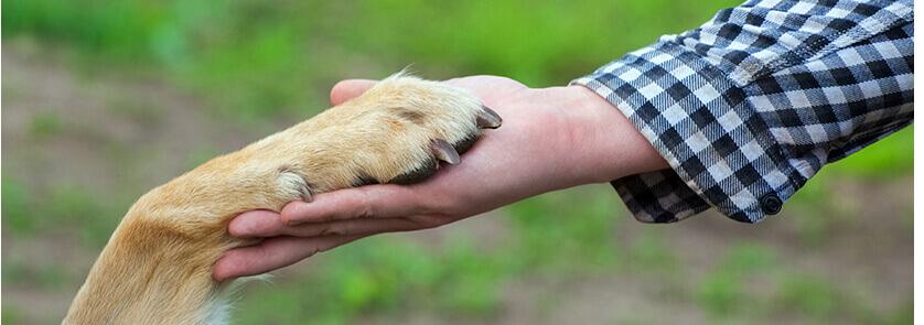 פנסיון ביתי לכלבים בנס ציונה
