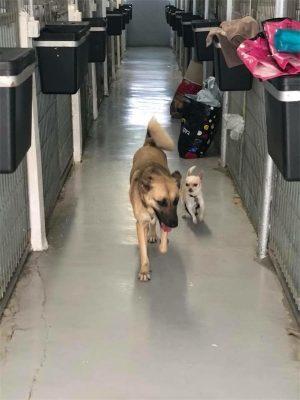 פנסיון לכלבים במרכז