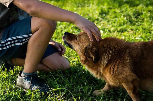 פנסיון לכלבים לטווח ארוך