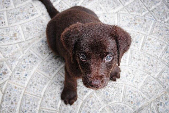 טיפים לאילוף הכלב שלכם