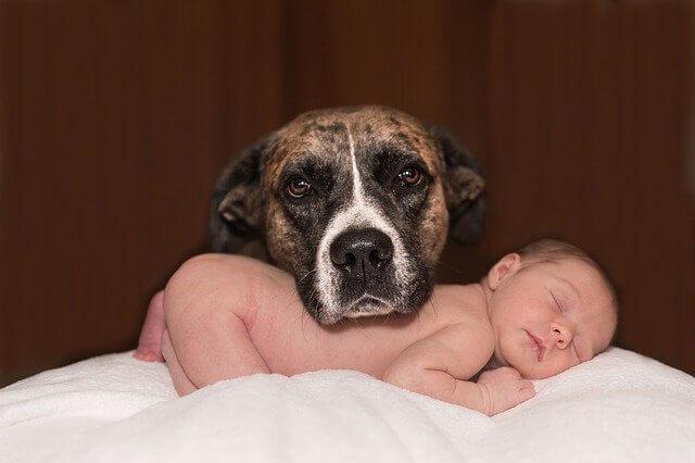 איך לגרום לכלב להתרגל לתינוק