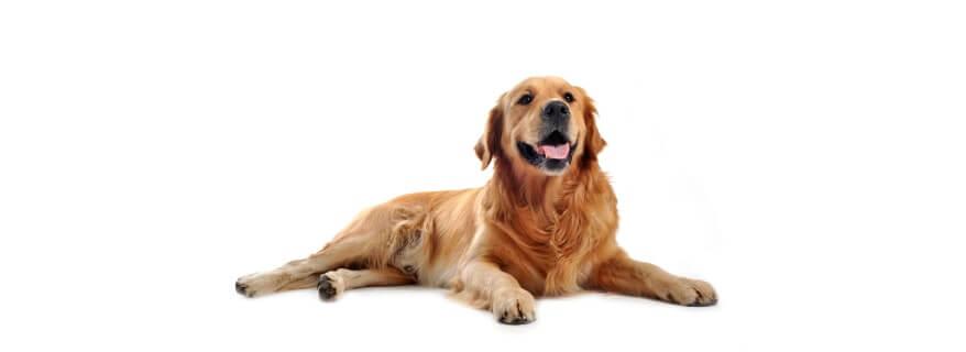 פנסיון לכלבים ברמלה