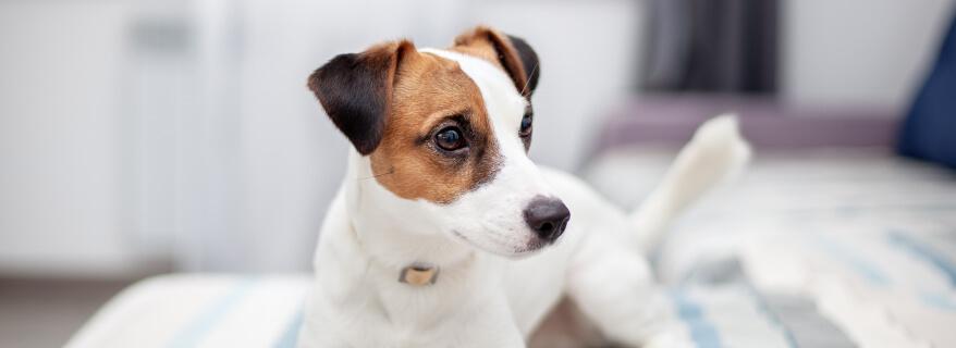 ביטוח בעלי חיים