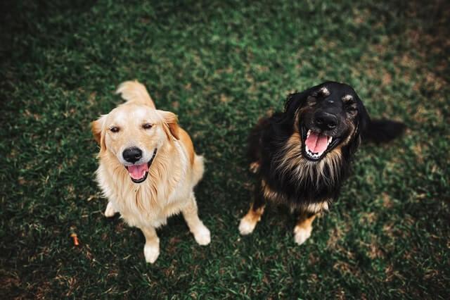 פנסיון לכלבים